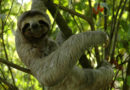 Favourite 5 Ways to 'Sloth' in Costa Rica