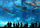 Favourite 5 Aquariums and Zoos in Tokyo