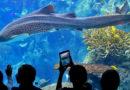 Aquarium of the Pacific – Long Beach