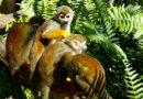 Monkeyland – Punta Cana