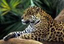 Favourite 5 Animals of the Amazon