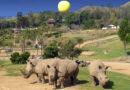 Roar & Snore San Diego Zoo Safari Park
