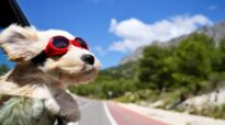 ProTips for Traveling with Your Pet